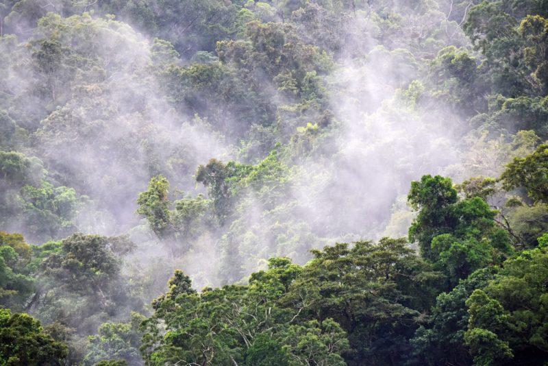 杉の木の花粉